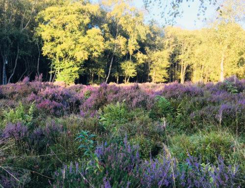 Purple Perfume Hills